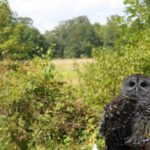Photo Event at The Raptor Trust
